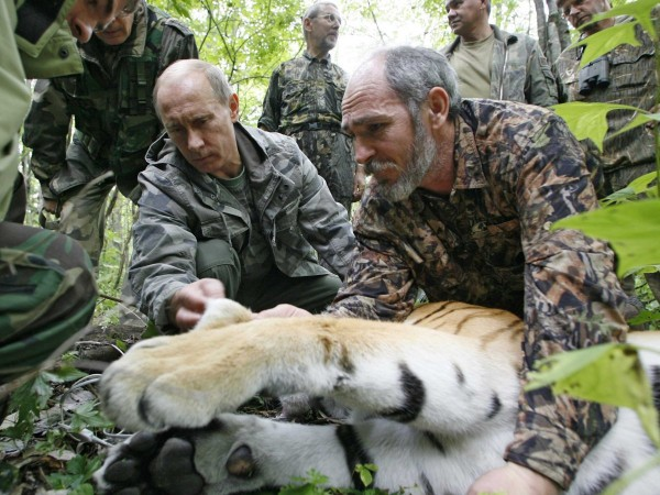 El participă și la expediții științifice. Aici Putin a neutralizat cu o pușcă tranchilizantă un tigru siberian.