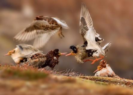 Păsări Foto Ondrej Pelanek Natural History Museum