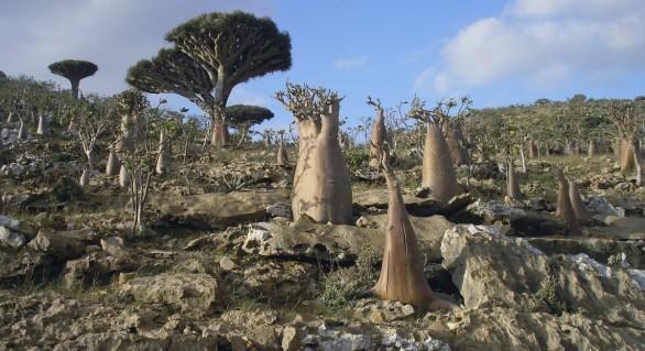 (FOTO și VIDEO) Peisaj extraterestru: Cum arată insula Socotra, cel mai fascinant ecosistem din lume