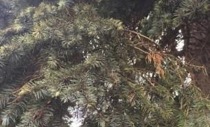 (FOTO) Cum va arăta pomul de Crăciun din PMAN