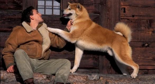 (VIDEO) Act emoționant al câinilor: Cei mai buni prieteni ai oamenilor, la spital alături de stăpânii lor
