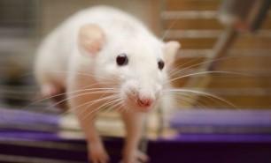 Şoarecii au fost transformaţi în ucigaşi prin intermediul luminii