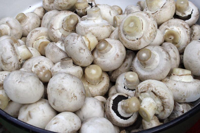 Atenție! 7 cazuri de intoxicații cu ciuperci în Chișinău: Cum pot fi prevenite
