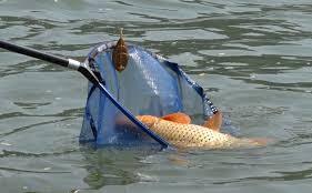 În atenția pescarilor. Ministerul mediului interzice pescuitul în anumite zone