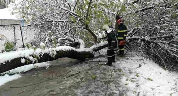 Situația în Chișinău la ora 16:00: Circa 90 de unități de transport avariate și peste 520 de copaci doborâți