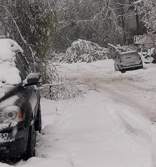 (GALERIE FOTO) Mutați-vă mașinile din drum. Peste 2 mii de copaci, prăbușiți la Chișinău
