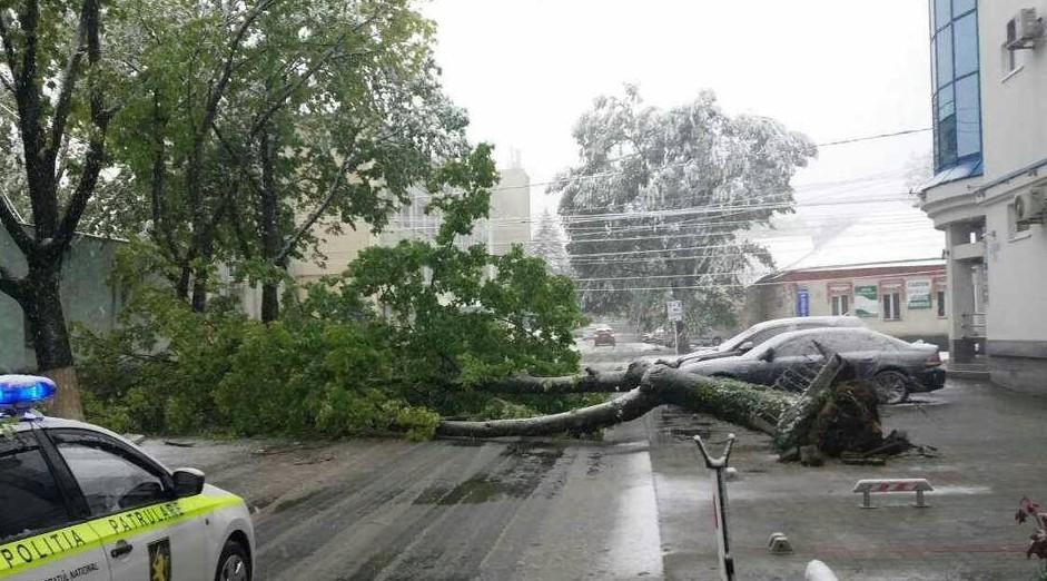 Ultima oră! Un angajat al unei școli din Chișinău a decedat, după ce un copac a căzut peste el
