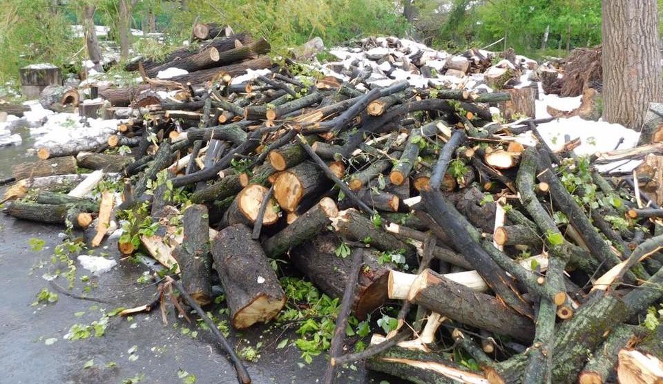 Fondul de rezervă al Chișinăului a fost suplinit: Cine va beneficia de lemnele, adunate în urma calamității