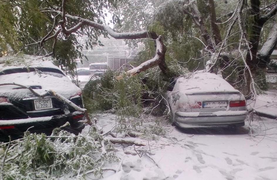 Ploaie cu crengi: Peste 500 de arbori, afectați de ninsoare în Chișinău