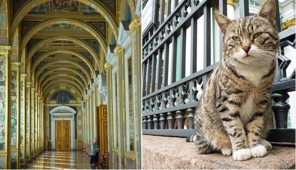 (FOTO) Muzeul în care își au culcușul 74 de pisici. Totul a pornit de la împărăteasa Ecaterina a-II-a