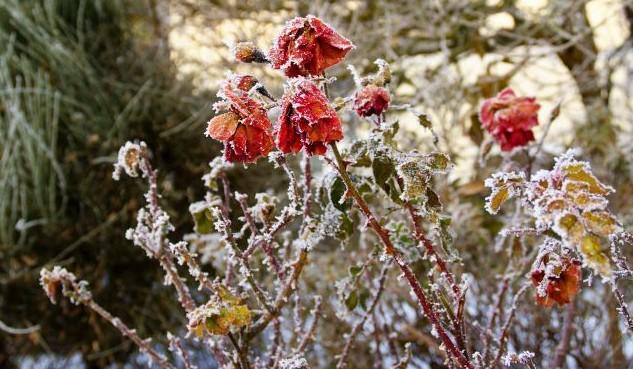 Pagubele în agricultură: Care zone au fost mai afectate de înghețuri