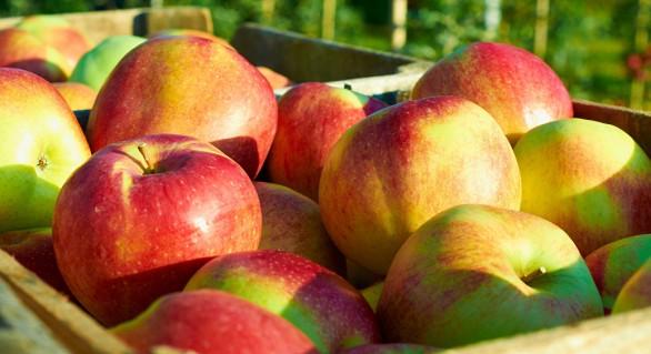 Șase persoane, reținute în dosarul ANSA pentru escrocherii la exportarea merelor în Rusia