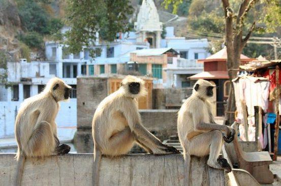 Maimuțele au provocat haos într-o clădire guvernamentală: Oficialii au fost nevoiți să-și părăsească birourile