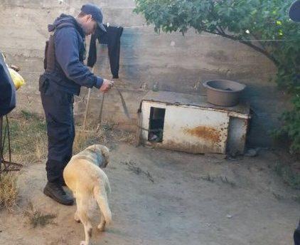 """Câinii polițiștilor au mirosit """"afacerea dubioasă"""": Ce ascundea un tânăr din Otaci în cuptorul din curtea casei"""