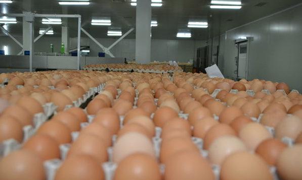 Scandalul ouălor contaminate din UE: Cât de afectată poate fi Republica Moldova