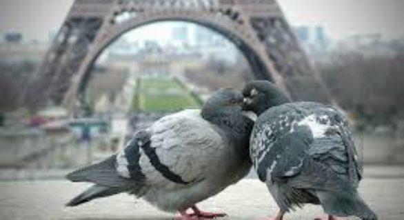 Parisul a eliberat prădători pentru a scăpa de porumbei