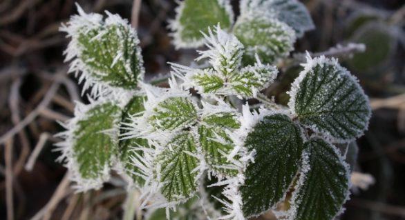 (METEO) De mâine, va fi mai frig: Meteorologii au emis cod galben de înghețuri