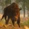 Un zimbru sălbatic, văzut pentru prima oară în ultimii 250 de ani în Germania, ucis de autorităţi