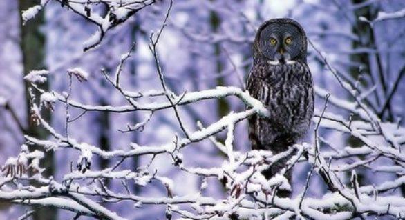 (METEO) Ne așteaptă o iarnă geroasă: Minime de -30 de grade în luna ianuarie
