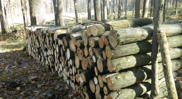 În fondul forestier au început lucrările silvice de toamnă; Cât va costa metrul ster în acest sezon