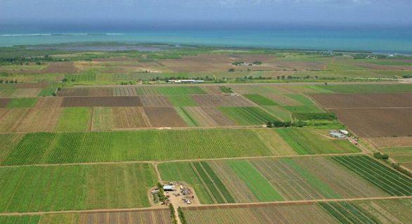 Terenurile agricole vor putea fi arendate pentru cinci ani. Termenul contractului de arendă, majorat