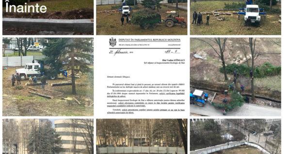 Parlamentul se pregătește de primirea deputaților din teritoriu?! Cel puțin 15 arbori din spatele clădirii, tăiați pentru amenajarea unei parcări