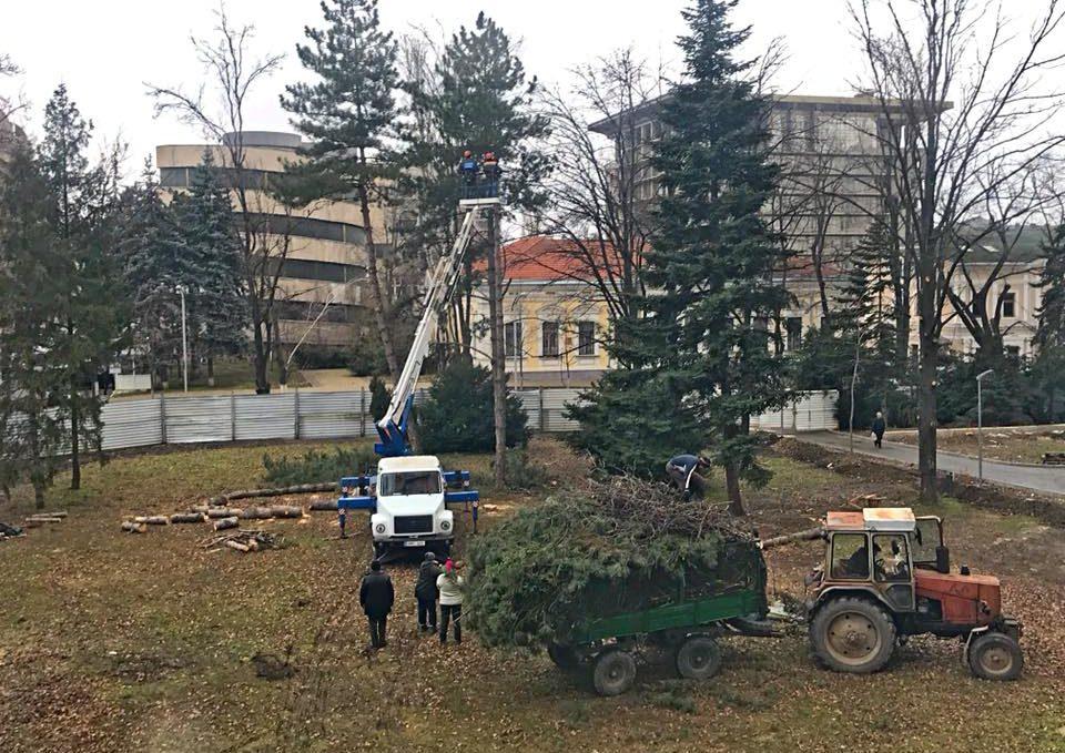 """Ciocănitoarele și dăunătorii xilofagi, găsiți """"vinovați"""" în tăierea a 29 de arbori de circa 40 de ani din spatele Parlamentului"""