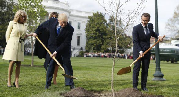 Misterul dispariției stejarului plantat de Macron și Trump la Casa Albă. Explicația oferită de Ambasadorul francez la Washington