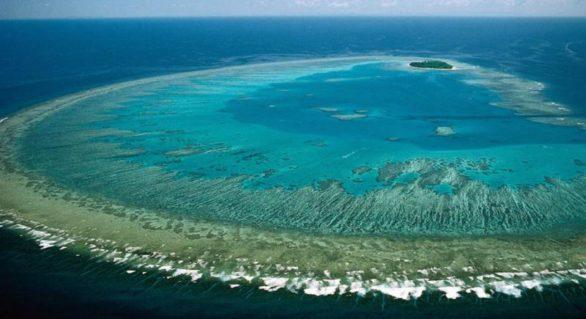 Metoda neobișnuită, ignorată până acum, prin care oamenii de știință cred că pot salva Marea Barieră de Corali