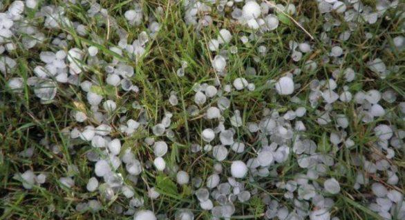 Grindina de duminică a distrus peste o sută de ha de vii și livezi la Călărași și 180 ha de sfeclă de zahăr la Drochia