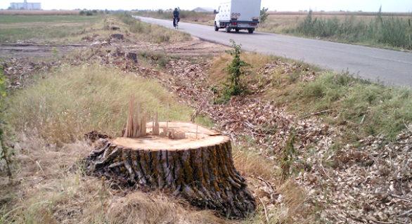 Ministerul Economiei analizează posibilitatea defrișării arborilor de pe marginea drumurilor, în scopul diminuării consecințelor accidentelor rutiere