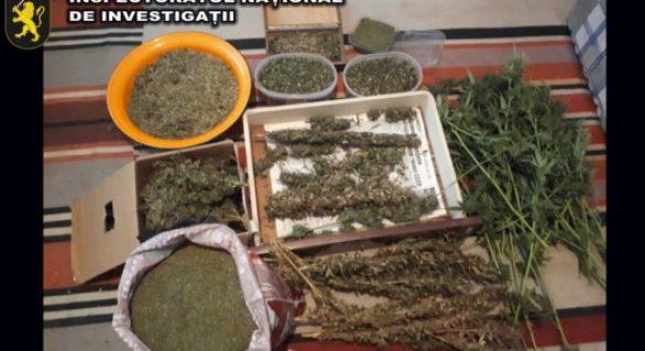 (VIDEO) Patru kg de marijuana ridicară de la doi bărbați din nordul țării. Un gram de drog era vândut cu 100 de lei