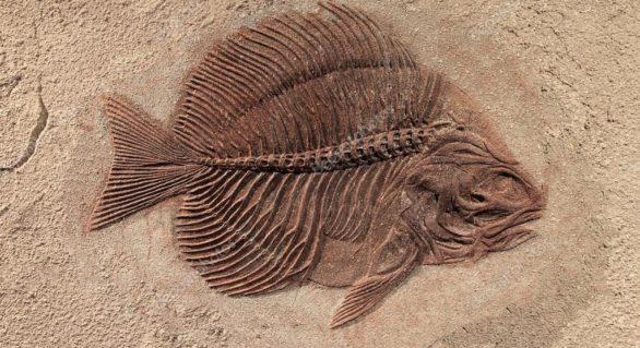 Istoria primelor vertebrate, rudele noastre foarte îndepărtate, a fost scoasă la iveală. De unde provin acestea