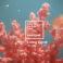 A fost aleasă culoarea anului 2019. După UltraViolet urmează Living Coral